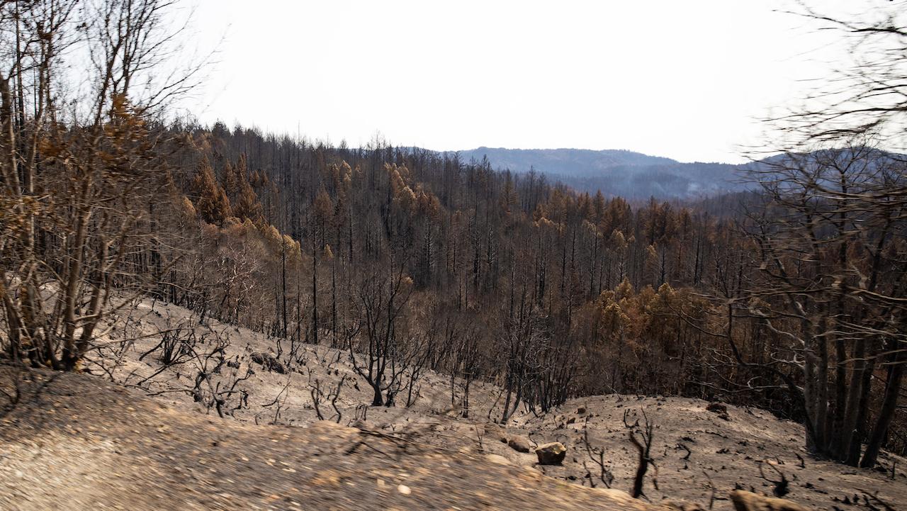 Podcast #78: CZU Torches Big Basin Redwoods, We Will Make Memories Here Again