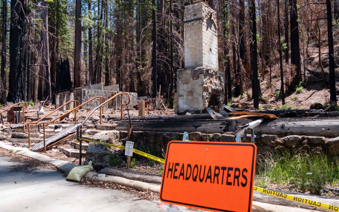 Recovery in Action at Big Basin Redwoods One Year after CZU Complex Fire Burns Park