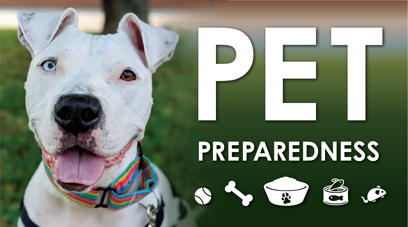 Emergency Preparedness: Include Pets in Your Evacuation Plans